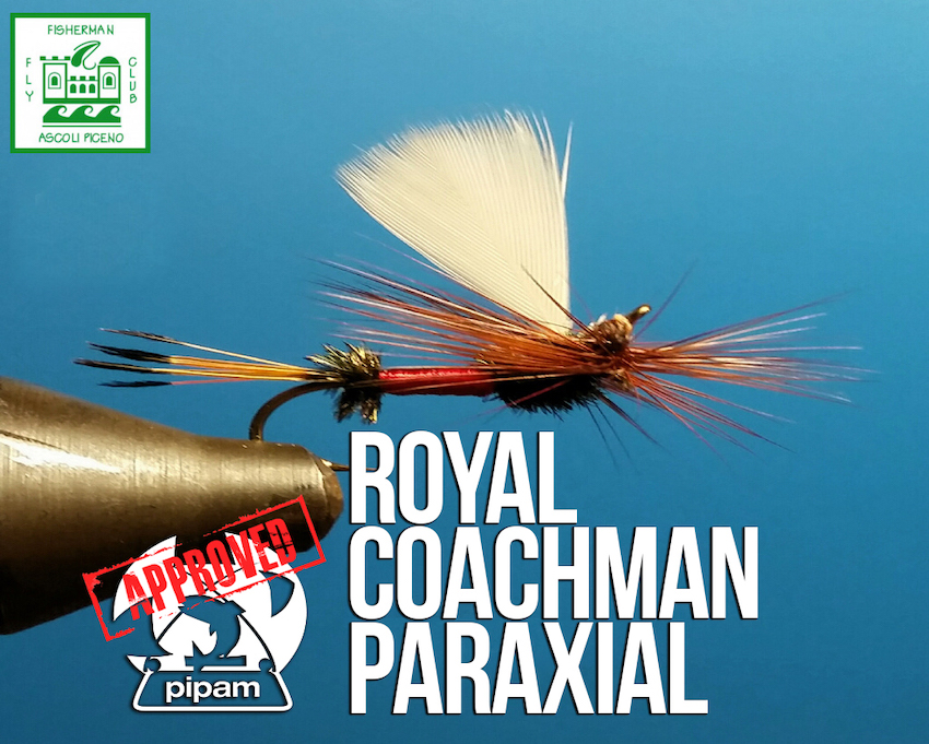 Royal Coachman Paraxial