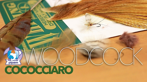 woodcockCoccociaro
